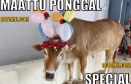 Cow Ponggal special